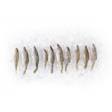 4 x 10 Köderfische 5 - 8cm