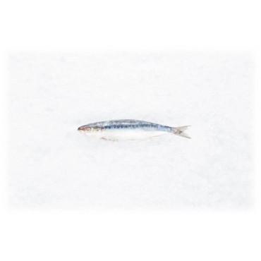 3 x 5 Sardinen 11 - 14cm