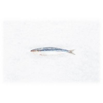 2 x 4 Sardinen 18 - 22cm